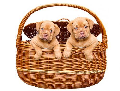 A kölyök kutyatáp minősége kiemelten fontos