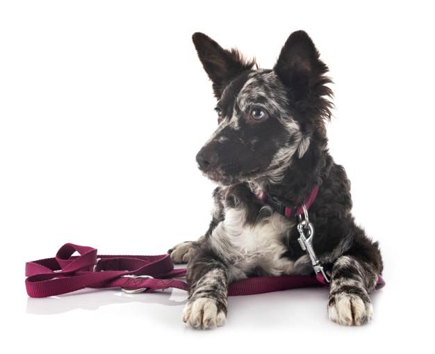 kutya örökbefogadása